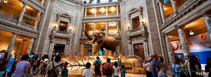 homepage-hero-museums-for-days-henry-the-elephant-smithsonian-museum-natural-history