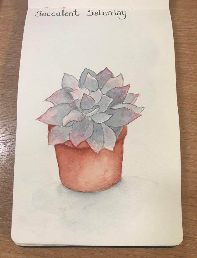 succulent sketch3