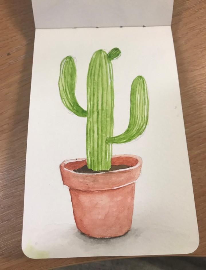 succulentsketch