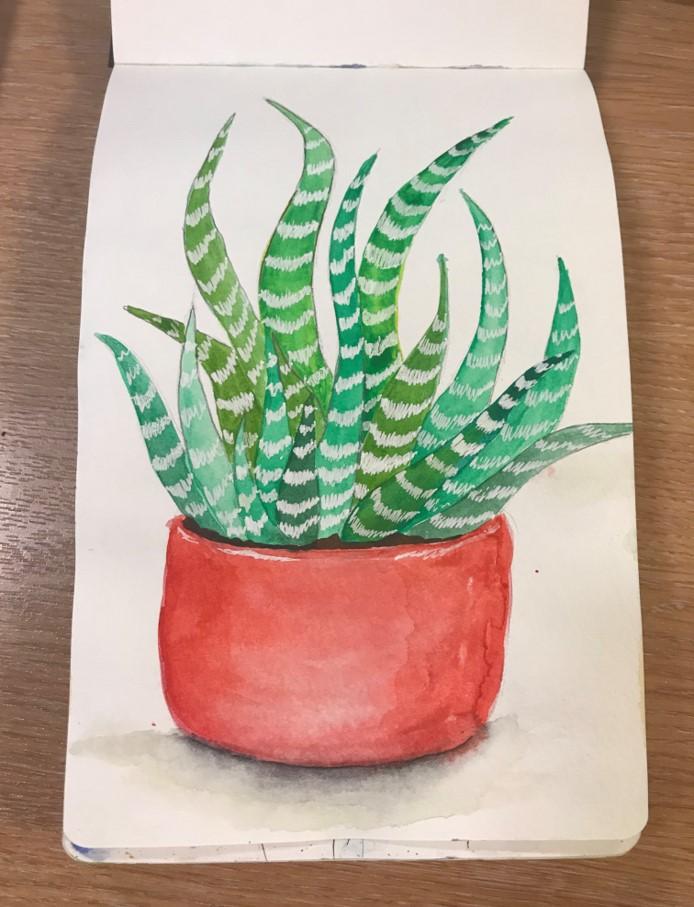 succulentsketch5